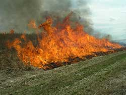 Head fire in field