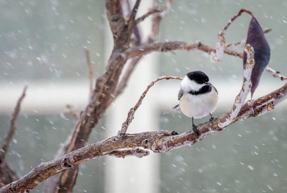 How Do Small Birds Survive a Long Winter?