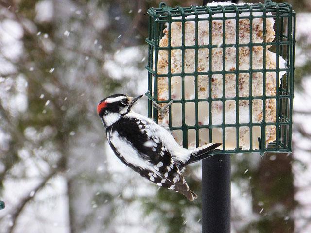 Is Winter Bird Feeding Good for Birds?