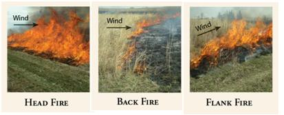 Three types of fire: Head fire (left), back fire (middle), and flank fire (right).