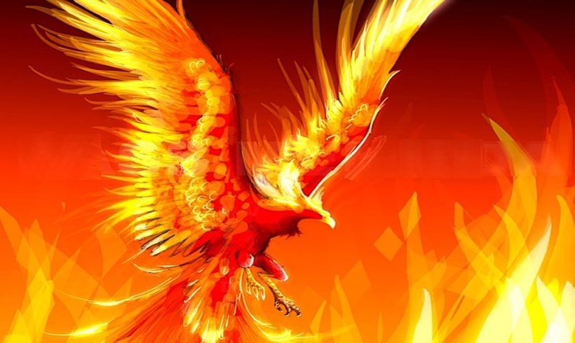 Burning Habitat: Profound Truth From A Real Fire Bird